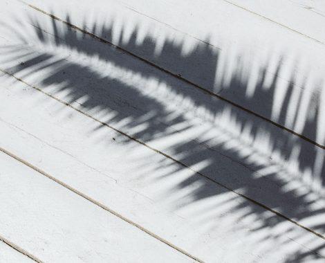 kaboompics_Palm leaf and shadow