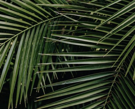 relaxing nature scene palm leaves